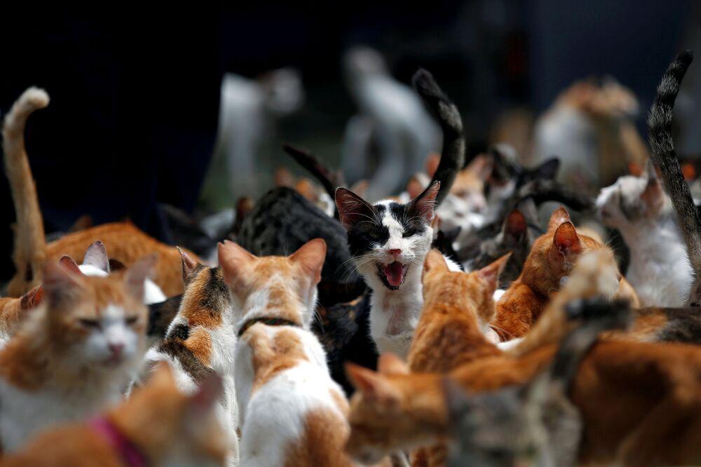 Gatos durante horário de almoço no abrigo para gatos indonésio Rumah Kucing Parung