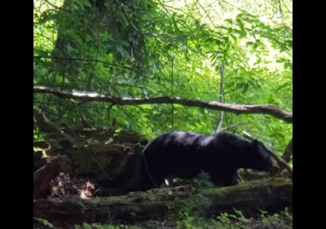 Mãe ursa assusta visitantes intrometidos