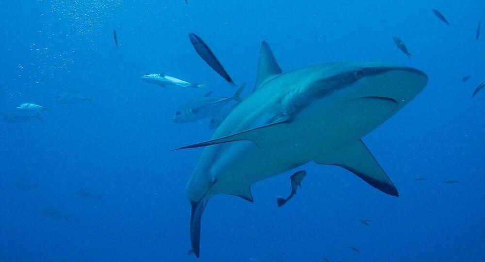Tubarão (foto de arquivo)