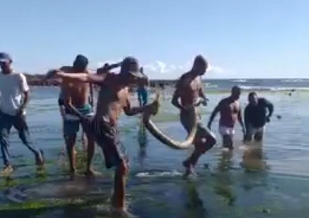 Jiboia surge em praia de Salvador