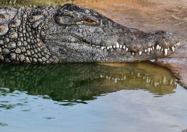 Fazenda de crocodilos na ilha de Djerba, na Tunísia