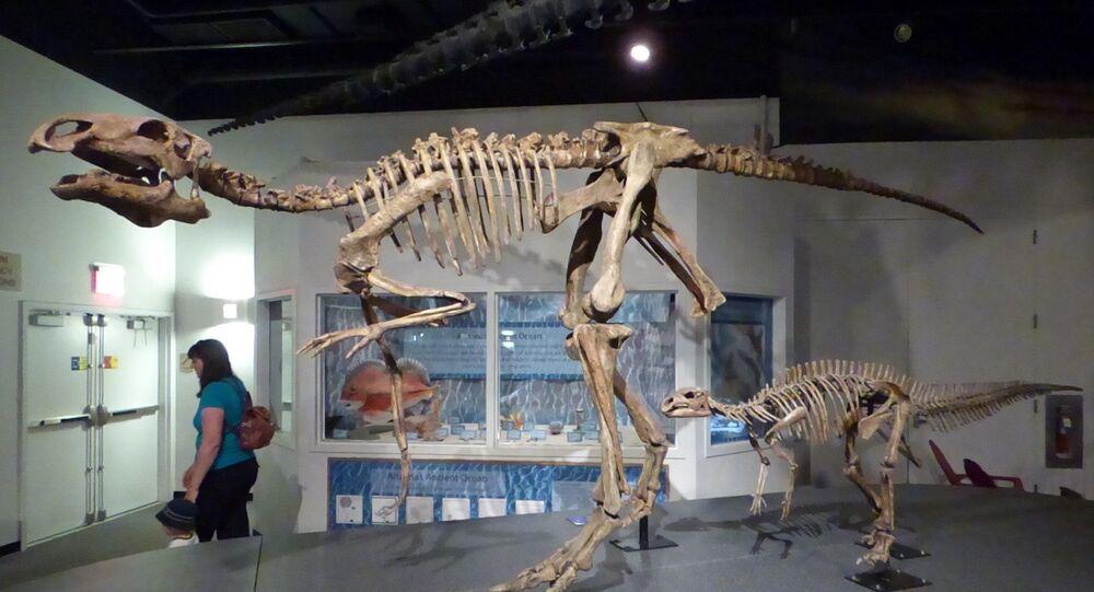 Iguanodonte no Museu de História Natural
