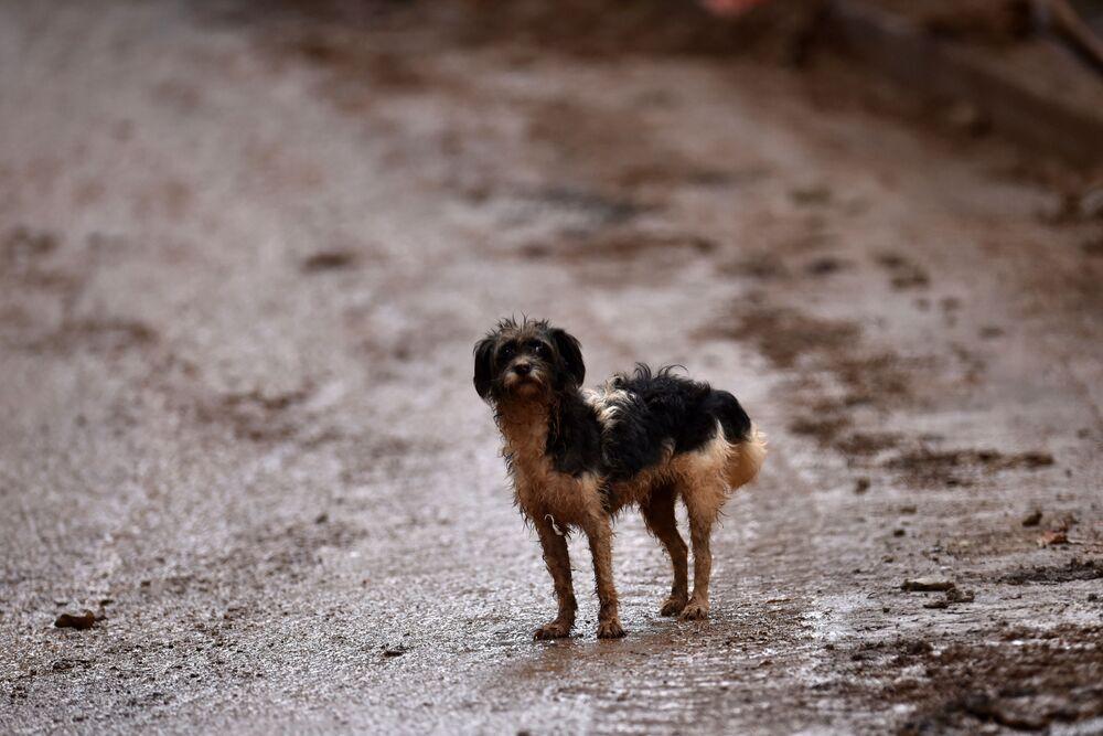 Cachorro em área afetada por deslizamento em Belo Horizonte