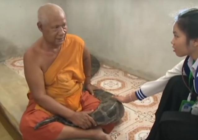Monge budista mantém píton de estimação com 'poderes de cura'