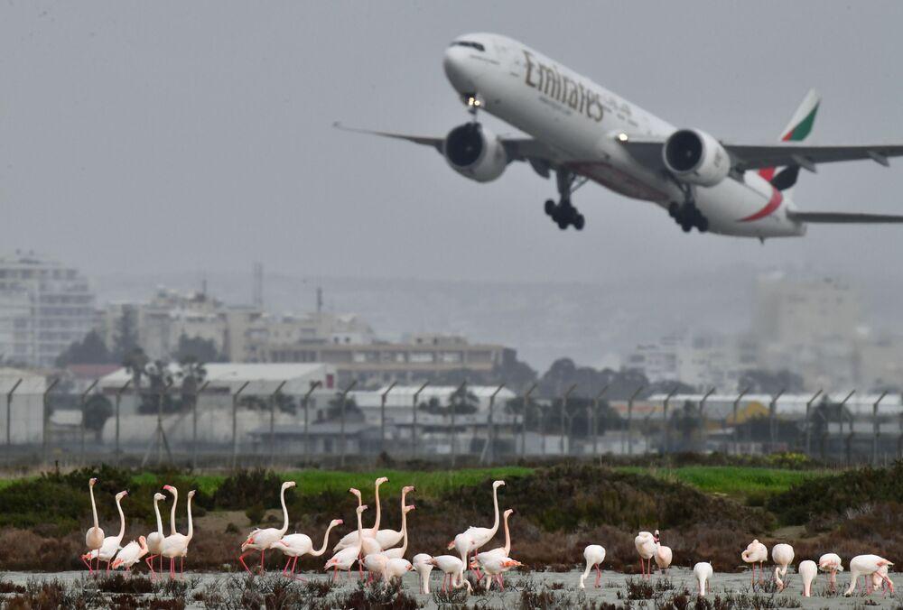 Flamingos rosa no lago Salgado perto do aeroporto de Larnaca, Chipre