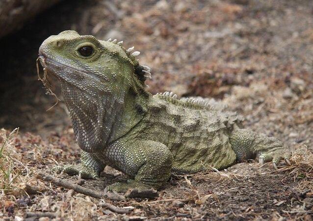 Lepidosauromorpha (imagem referencial)