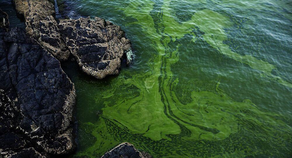 Algas verdes em praia em Omã
