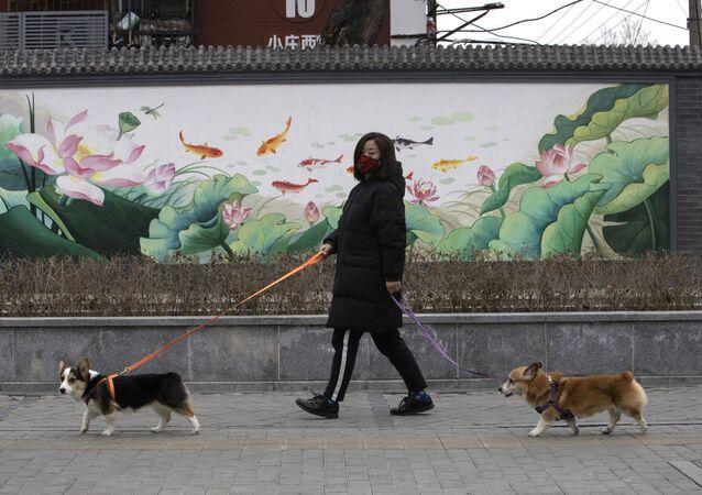Mulher caminha com cachorros em meio a epidemia do coronavírus na China