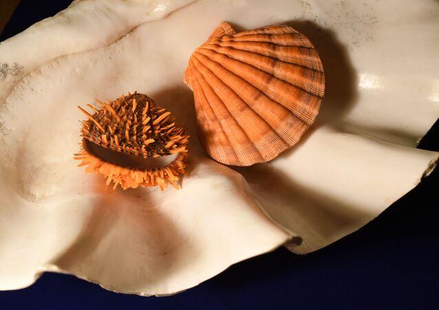Conchas de moluscos na exposição Animais simples e extraordinários dedicada ao 110º aniversário do Museu de Darwin em Moscou, Rússia