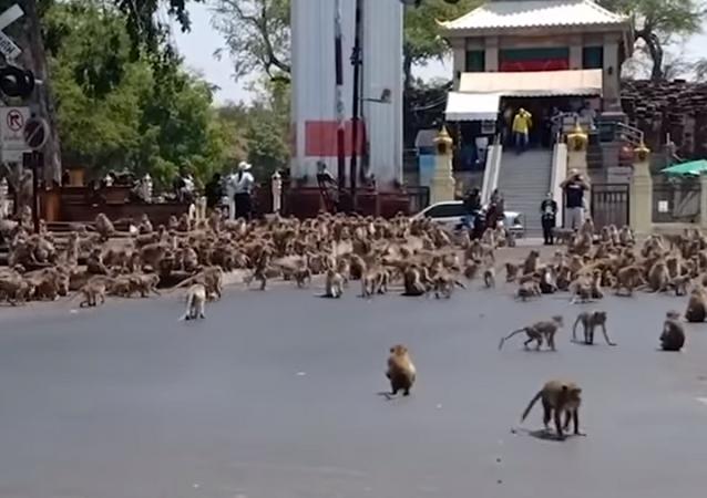 Tailândia presencia invasão de 'exército' de macacos