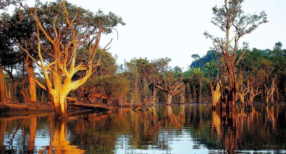 Rio Tupana, na Floresta Amazônica, no estado do Amazonas