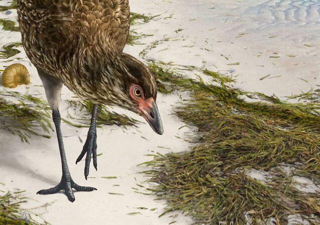 Imagem tridimensional do crânio da ave anatomicamente mais antiga do mundo, Asteriornis maastrichtensis