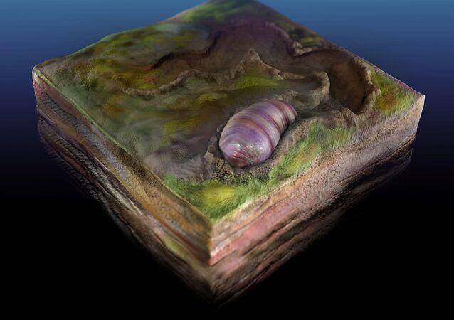 Ikaria wariootia, animal semelhante a verme pode ser o antepassado de todos os animais bilaterais (ilustração artística)