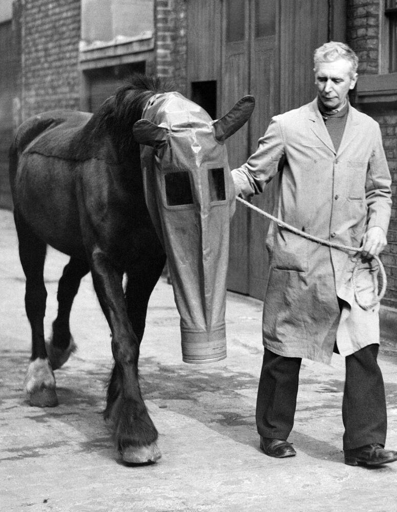 Cavalo portando máscara para gás em Londres, em 1940