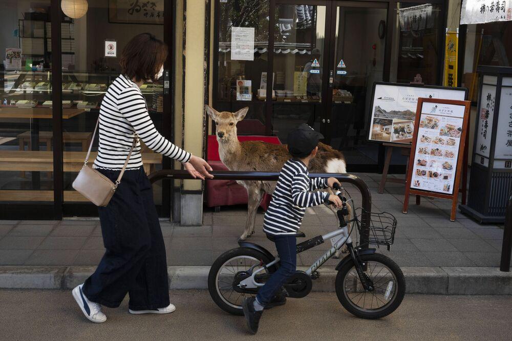 Criança anda de bicicleta perto de veado no Japão