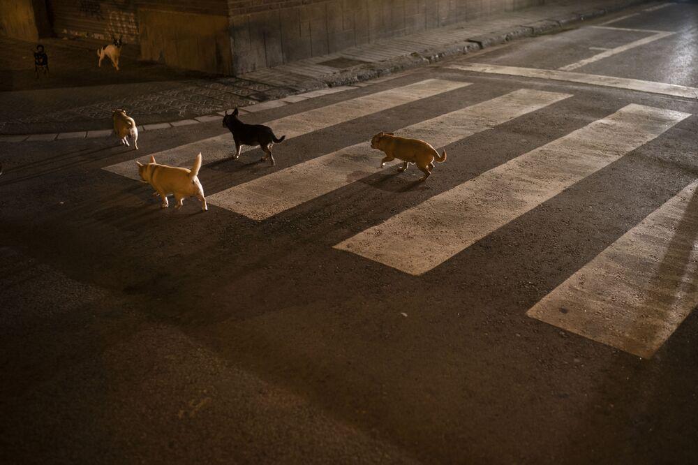Matilha de cachorros cruza rua vazia de Barcelona