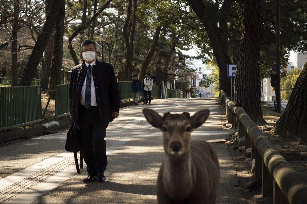 Pedestre próximo a veado no Japão