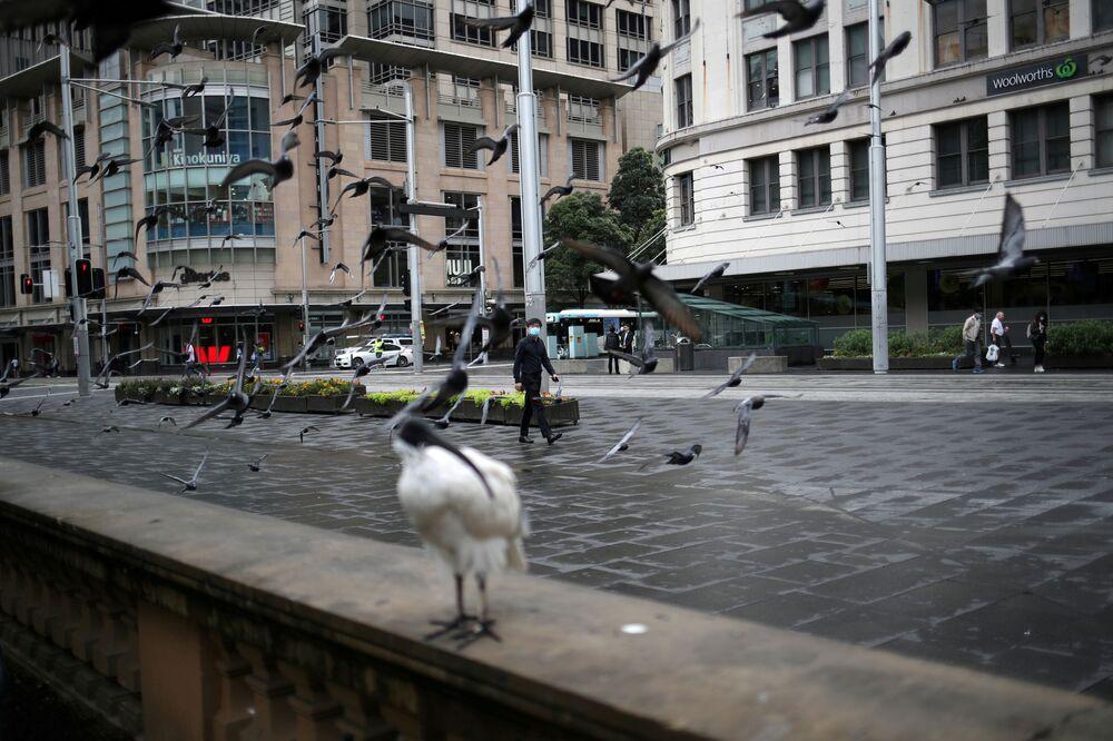Pássaro em rua deserta na Austrália
