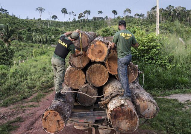 Agentes do Ibama apreendem uma carga ilegal de madeira na área indígena de Cachoeira Seca, no Pará