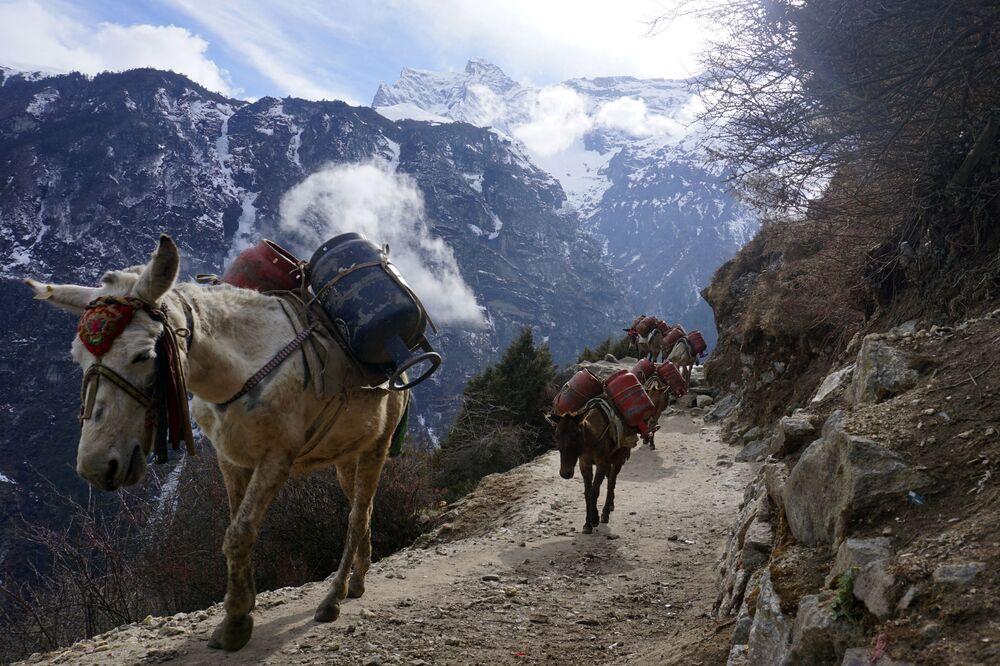 Mulas transportam cilindros de gás vazios durante pandemia de coronavírus, perto de Namche Bazar, na região do Evereste, 24 de março de 2020