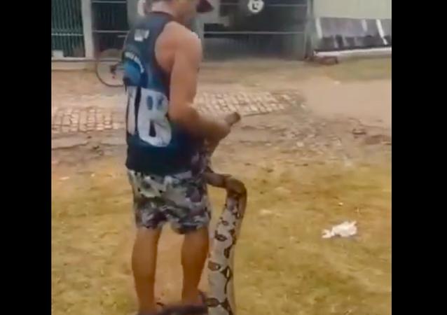 Jiboia de 4 metros é capturada tentando entrar em quintal no Acre