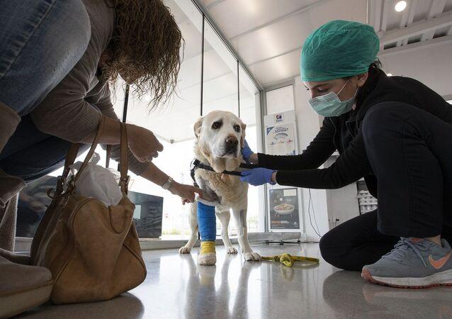 Cachorro visita veterinário na Espanha (foto de arquivo)