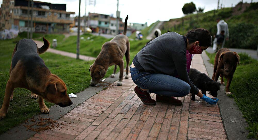 Ativista dos direitos dos animais alimenta cães de rua em meio ao surto de coronavírus em Bogotá, Colômbia, 4 de abril de 2020