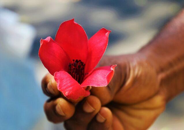 Pessoa segura flôr rosa