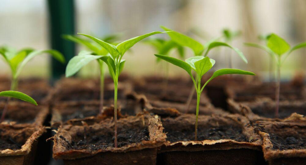 Plantas (imagem referencial)
