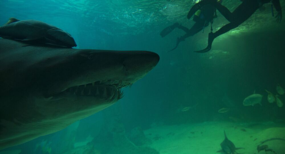 Tubarão-touro em aquário na Espanha