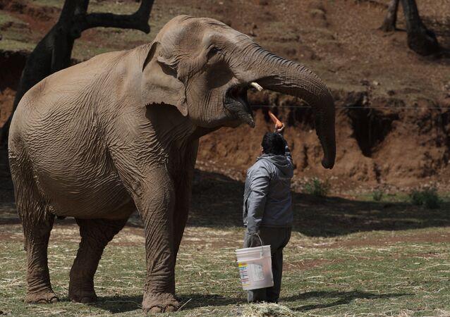 Homem alimenta elefante no Bioparque Estrella, no México