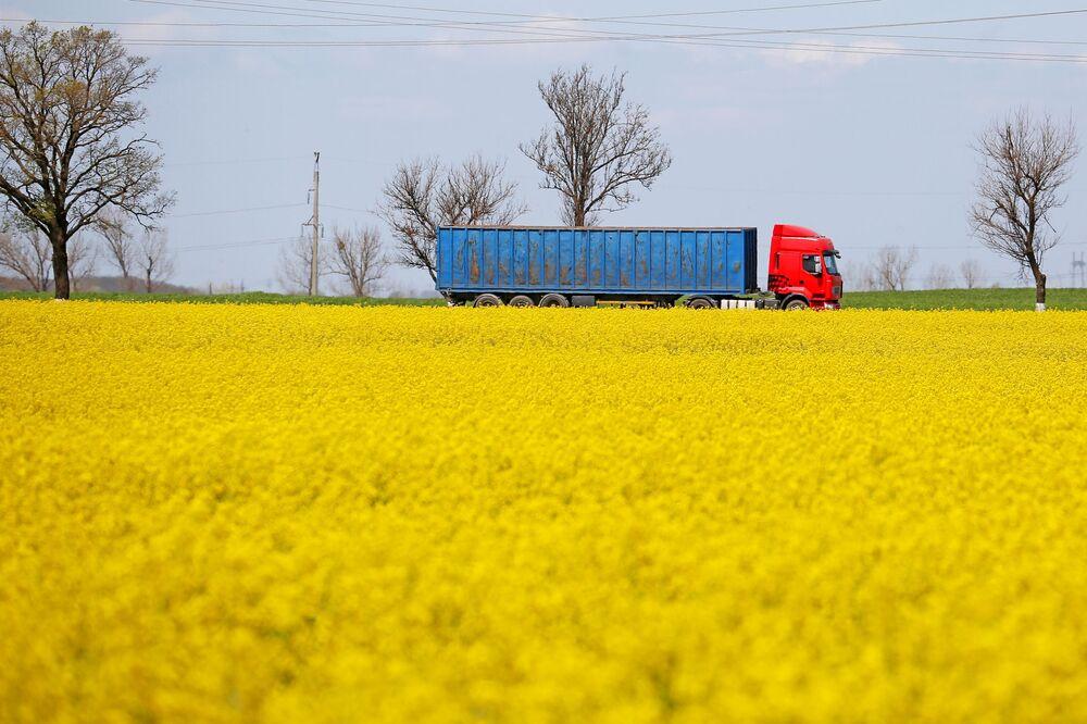 Colzas florescem na região de Krasnodar