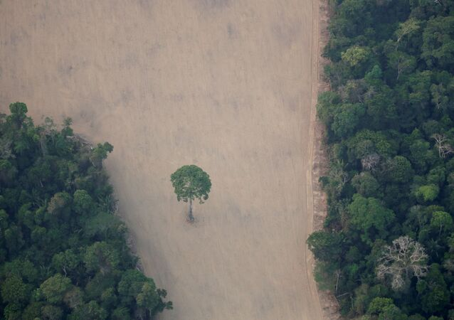 Vista aérea mostra uma parcela desmatada da Amazônia perto de Porto Velho, Rondônia, Brasil (foto de arquivo)