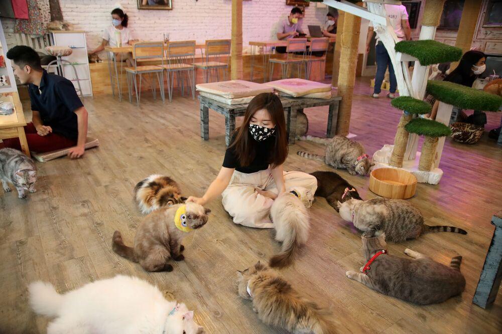 Clientes do café Caturday Cat em Bangkok, Tailândia