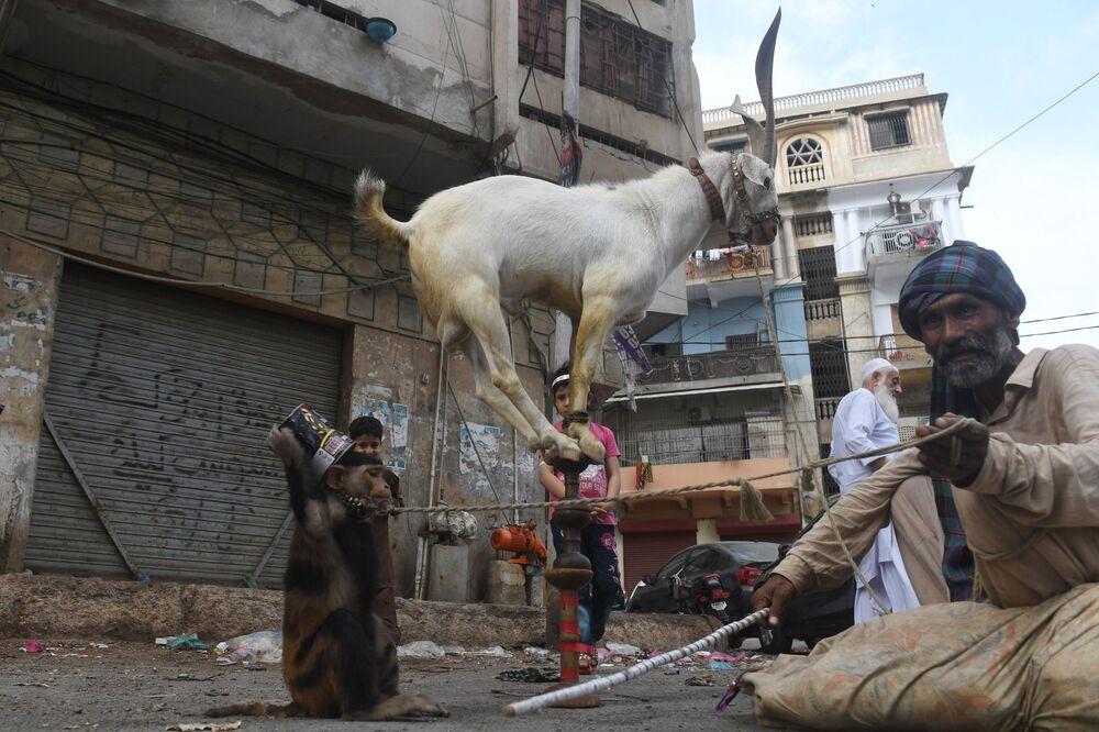 Treinador de animais com macaco e cabra durante uma apresentação em Karachi, Paquistão