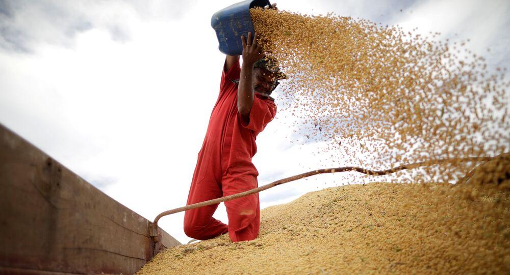 Trabalhador inspeciona colheita de soja na cidade de Campos Limpos (foto de arquivo).
