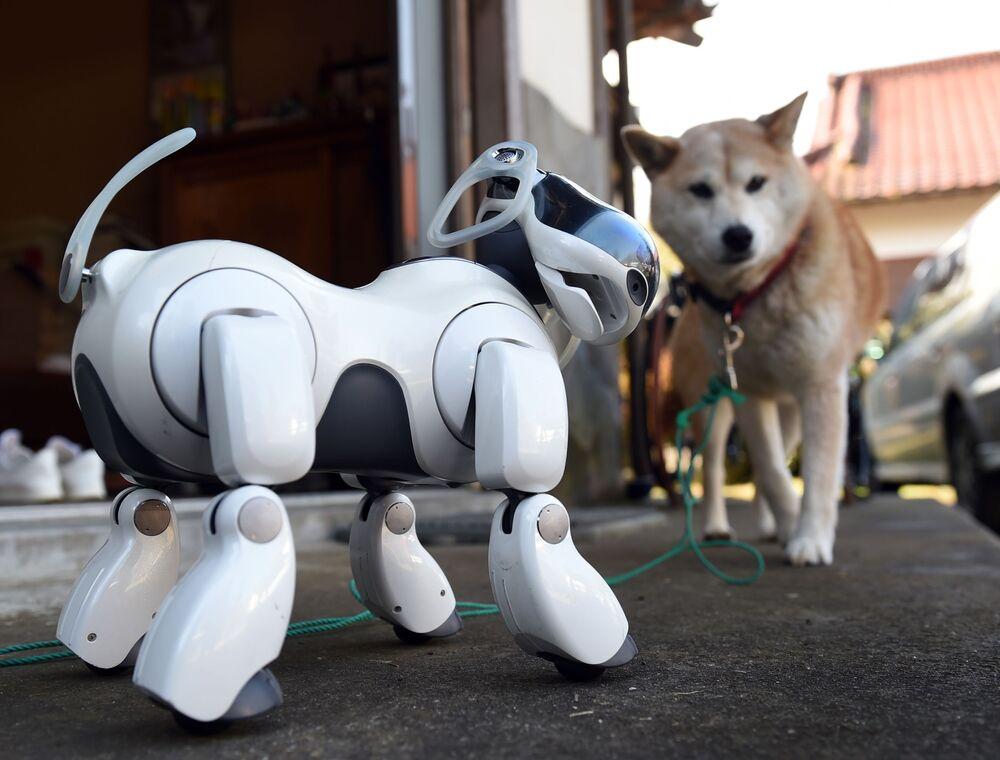 Popular robô japonês AIBO.