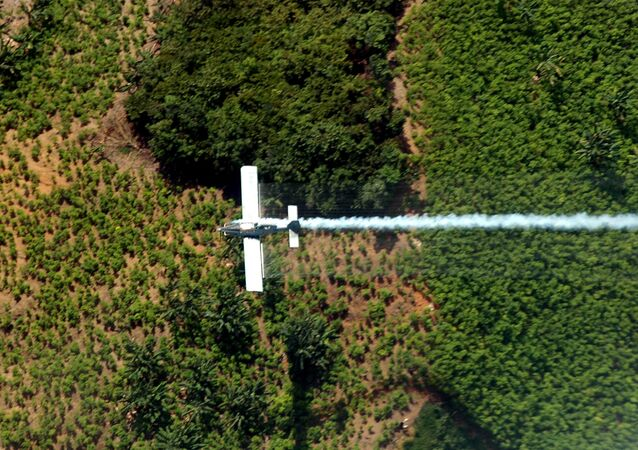Plantação de folhas de coca em El Catatumbo, no norte do departamento de Santander, na Colômbia (arquivo)