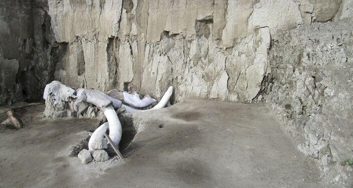 Fossos escavados há mais de 15.000 anos que serviam de armadilhas para humanos caçarem mamutes