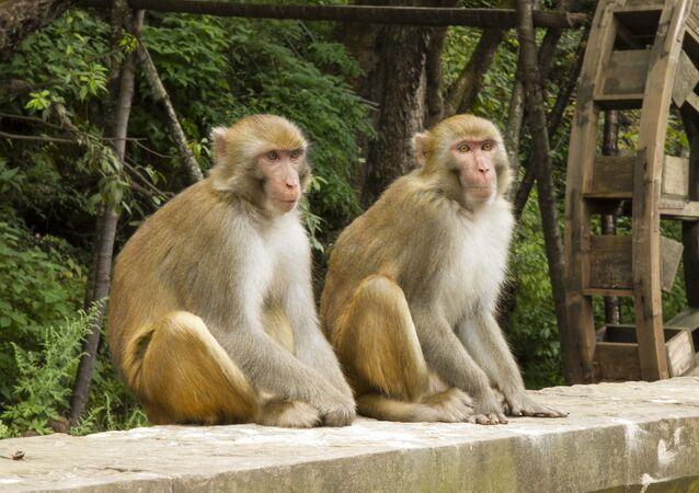 Macacos (imagem ilustrativa)