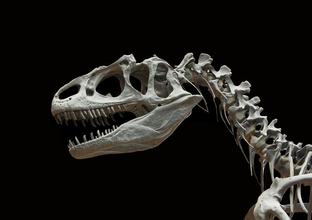 Fóssil de dinossauro (imagem ilustrativa)