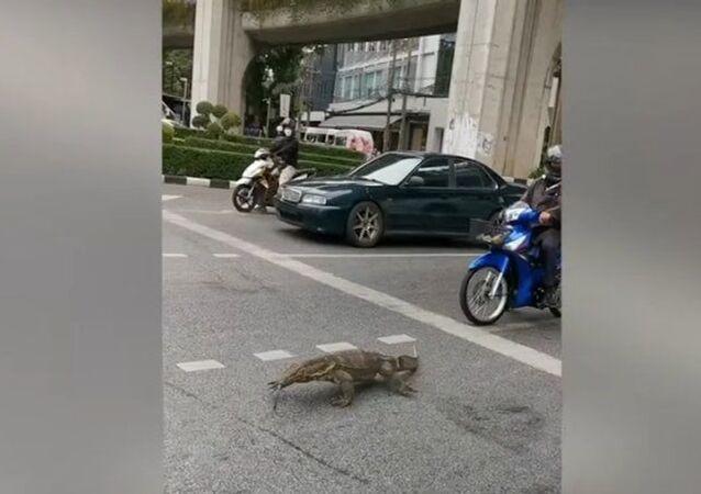 De parar o trânsito: lagarto-monitor mostra quem é 'dono' de Bangkok