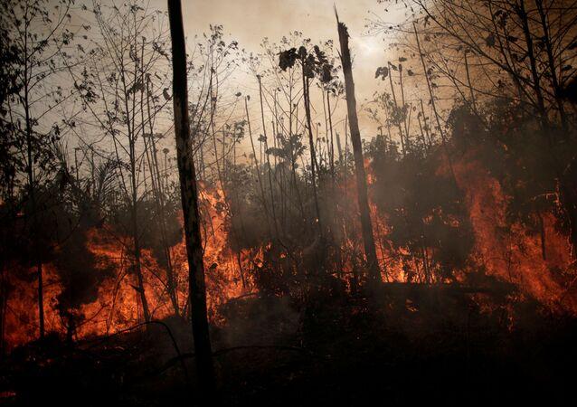 Queimada da floresta amazônica em 2019.