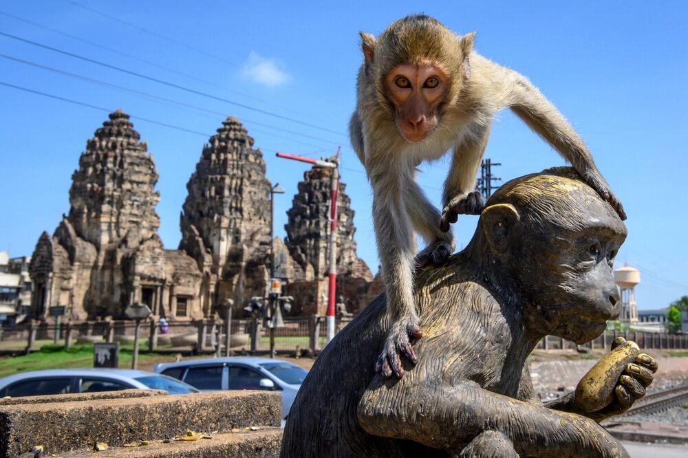 Fotografia de macacos próximos ao templo budista Sam Yod na cidade tailandesa de Lopburi
