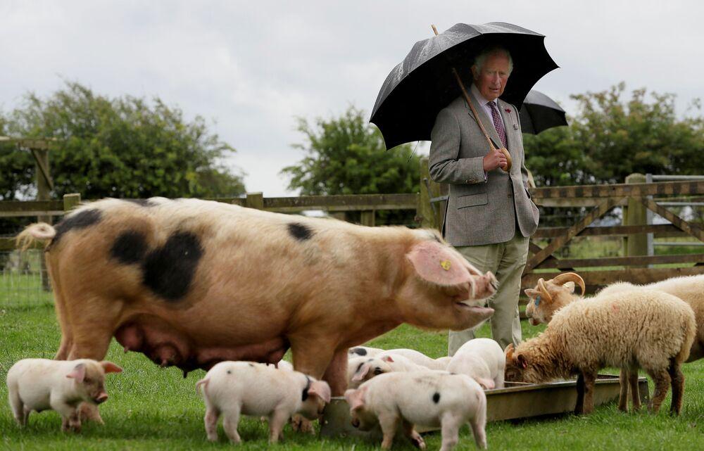 O herdeiro do trono britânico, príncipe Charles, durante uma visita ao parque rural de Cotswold, Reino Unido