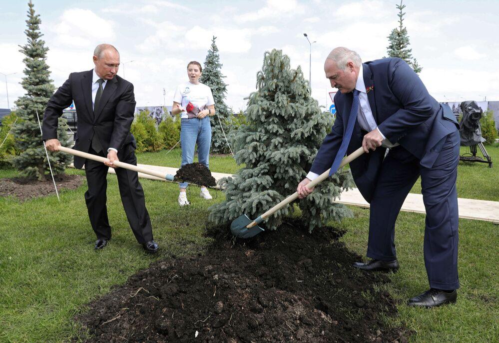 Presidente russo Vladimir Putin e líder bielorrusso AleksandrLukashenko plantam abeto azul na cerimônia de abertura do memorial ao Soldado Soviético na cidade de Rzhev