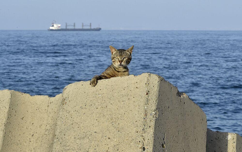 Gato se escondendo no passeio marítimo durante o toque de recolher imposto pelas autoridades da Argélia