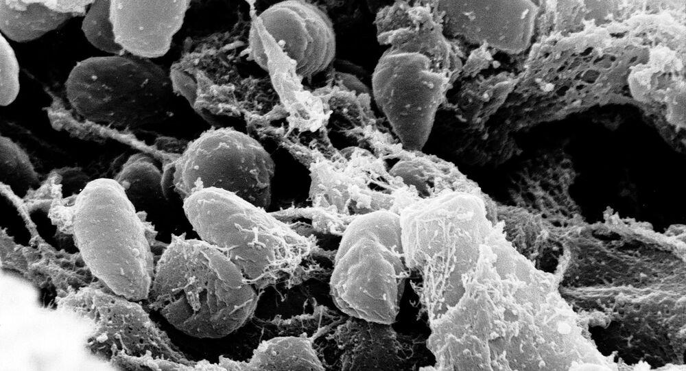 Bactérias Yersinia pestis, causadora da peste bubônica