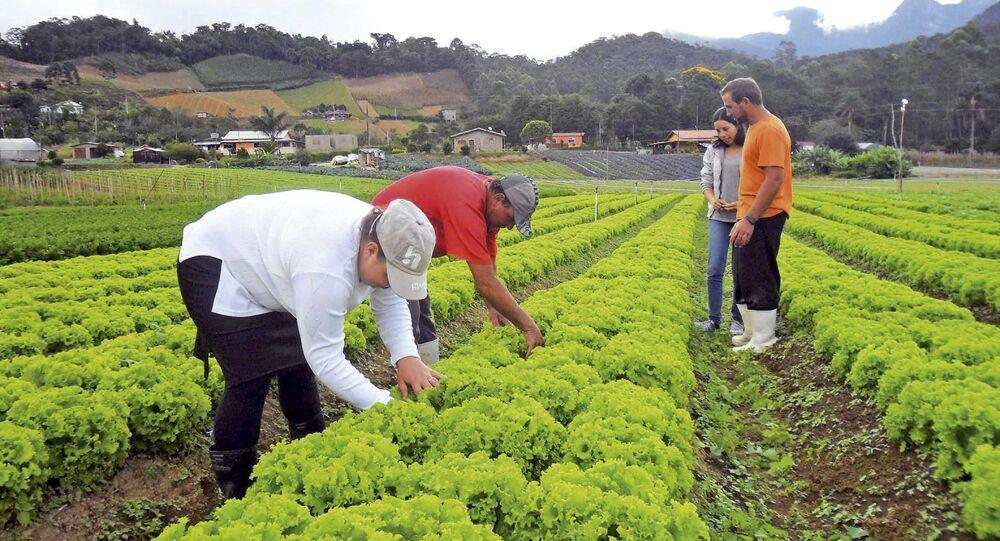 País africano sedia fórum econômico sobre agronegócio com presença do ministro brasileiro da Agricultura