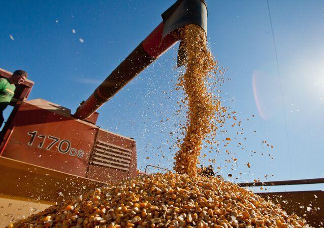 Agricultura brasileira deve bater novo recorde na safra de grãos 2015-2016